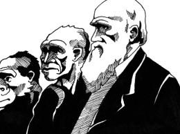 Darwin illustration