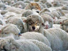 falsos-profetas-ovejas-lobos